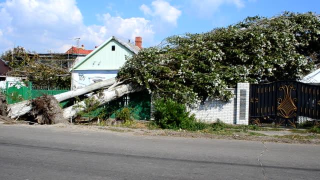vidéos et rushes de maisons rempli avec les arbres tombés. - endommagé