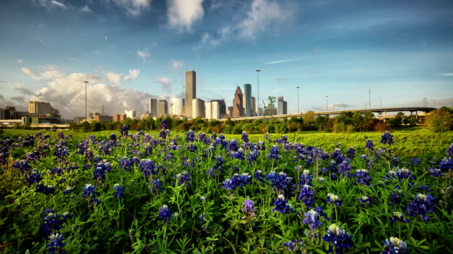stockvideo's en b-roll-footage met houston bluebonnets - texas