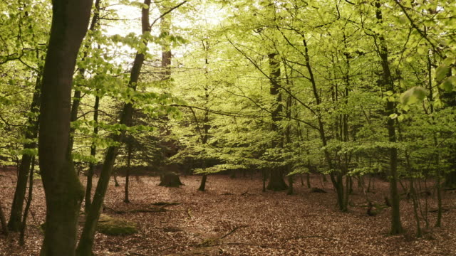 hover shot in the forest with dry leaves on the ground and low hanging leaves - danimarca video stock e b–roll