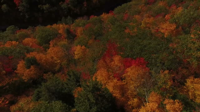 Hovering Over Expansive Fall Foliage video