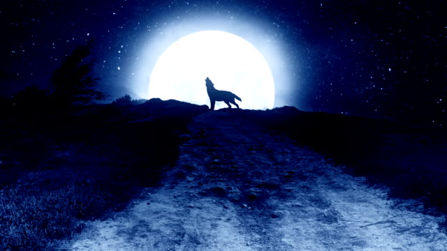 howling wolf to the moon on the hill at night. - lupo video stock e b–roll