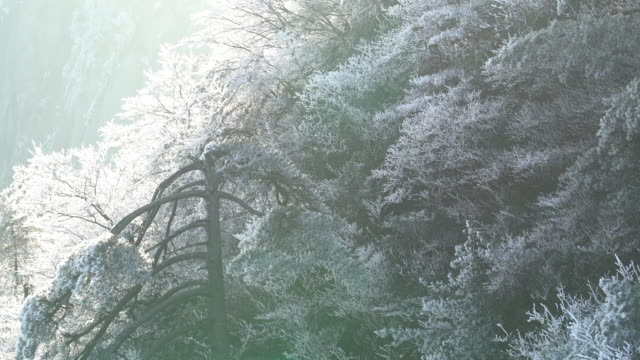 Huangshan mountain in winter,China. Huangshan mountain in winter,China. pine tree stock videos & royalty-free footage