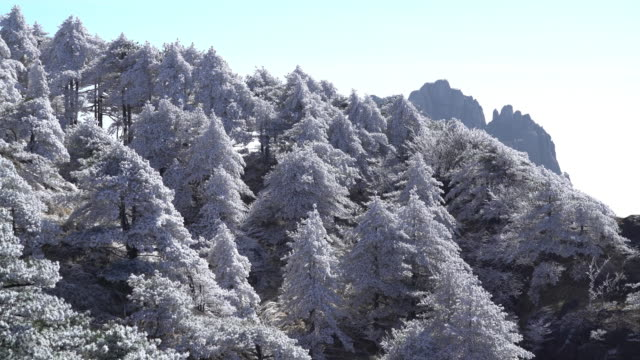 Huangshan mountain in winter,Time lapse. Huangshan mountain in winter,China. pine tree stock videos & royalty-free footage