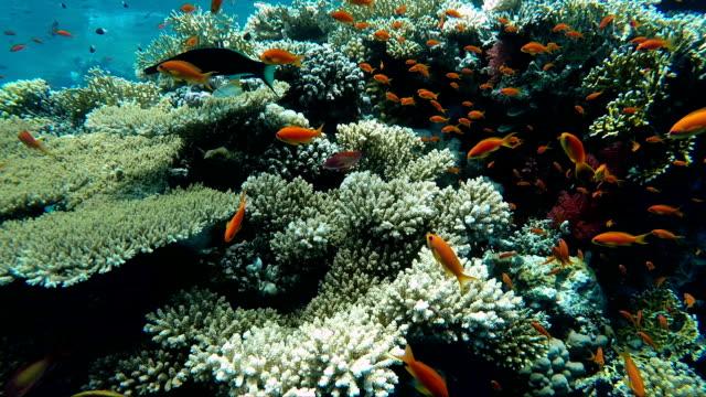 vídeos y material grabado en eventos de stock de gran cantidad de peces, mar rojo, arrecifes de coral - palaos