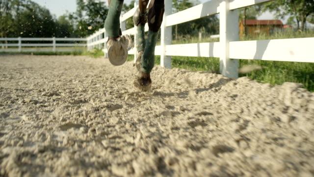 vídeos de stock e filmes b-roll de slow motion close up: huge dark brown gelding galloping in sandy riding arena - cercado
