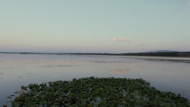 Huge flock of bird on lake in Işıklı Lake