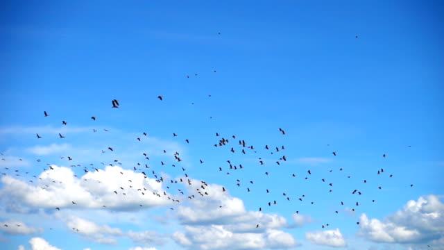 slo mo-cloudscape로 비행 하는 조류의 거 대 한 무리 - 하늘을 나는 새 스톡 비디오 및 b-롤 화면
