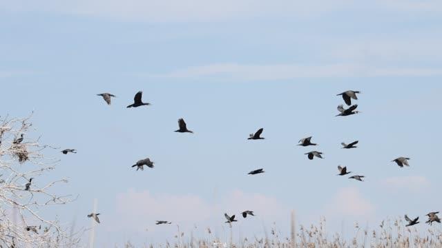 huge flock of black birds sits on a tree