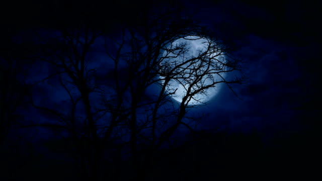 Huge Full Moon Behind Bare Trees Late At Night Enormous moon in the night sky behind trees count dracula stock videos & royalty-free footage