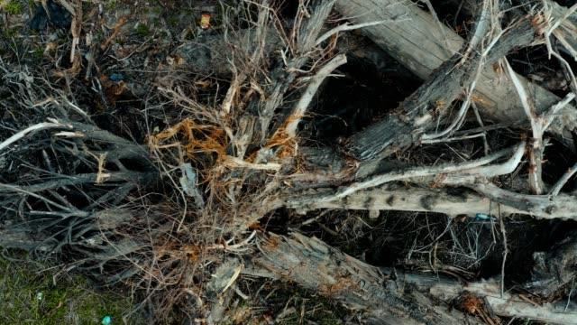 Huge Heap Of Felled Trees