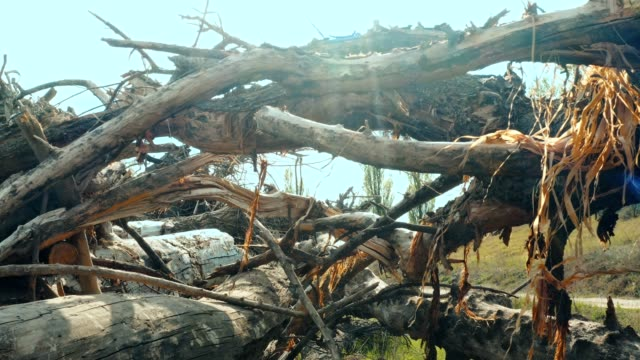 huge heap of felled trees - albero caduto video stock e b–roll