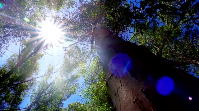 Huge tree in Forest and Sunlight