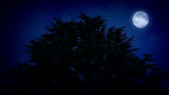 Huge Trees With Moon On Windy Night video