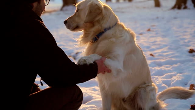 Hugging and  hand shaking between young guy and retriever dog Hand shaking and friendfull hugging between young male and dog on cold frosty winter day paw stock videos & royalty-free footage