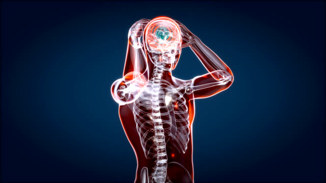 Human and brain xray, human anatomy, 3D Animated video