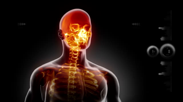 Human body medical x-ray scan video