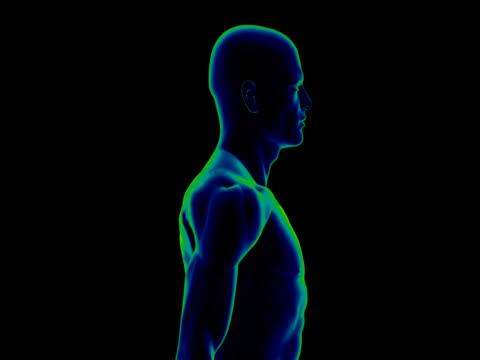 人体の研究のための男性 - 人の筋肉点の映像素材/bロール