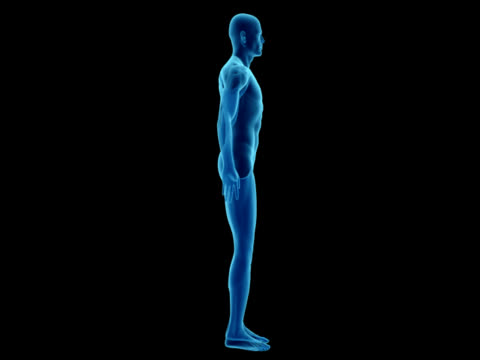 Human body of a man for study video