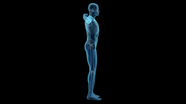 Human body of a man with skeleton for study video