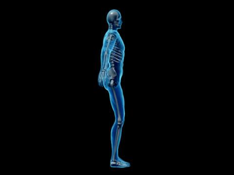 human body of a man with skeleton for study - i̇nsan i̇skeleti stok videoları ve detay görüntü çekimi
