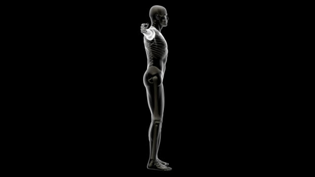 Human body of a man with skeleton for study Human body of a man with skeleton for study, spinning, great to be used in medicine works and health. Isolated on a black background.  full length stock videos & royalty-free footage