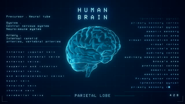 Human Brain Animation - Loopable