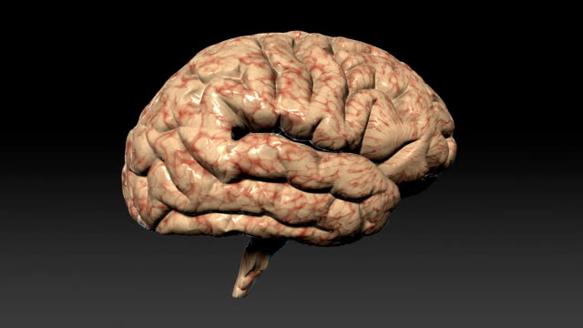Human brain assembling,seamless loop,Alpha Channel 3d animation of a human brain parts getting together, looping, Alpha included hypothalamus stock videos & royalty-free footage