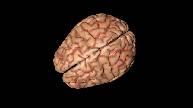 Human brain in rotation seen from above Animation of human brain in rotation seen from above hypothalamus stock videos & royalty-free footage