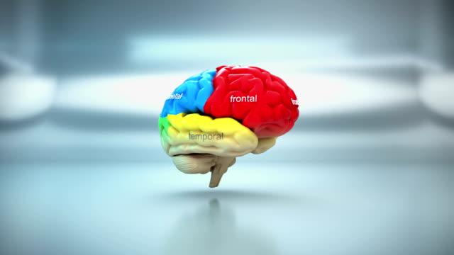 Human Brain Lobe - Parts | Loopable matte key 3d animation cerebellum stock videos & royalty-free footage