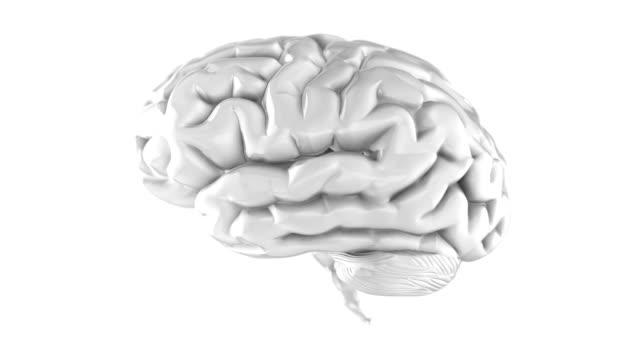 Human Brain loop