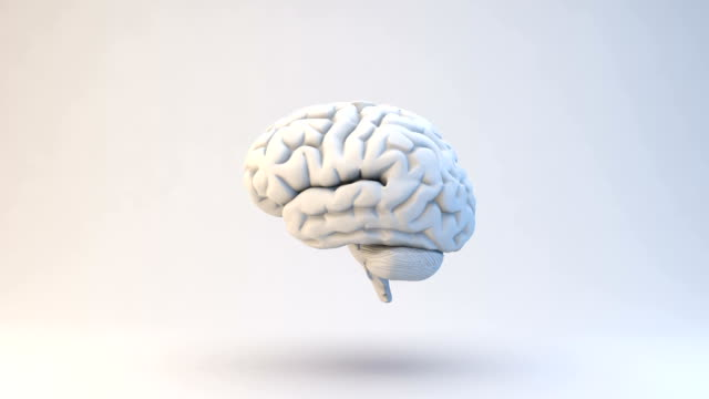 Human Brain | Loopable