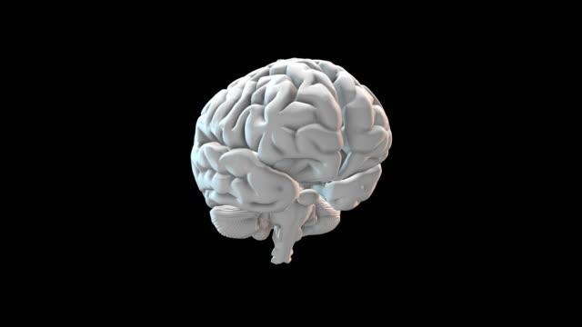 Human Brain - Loopable