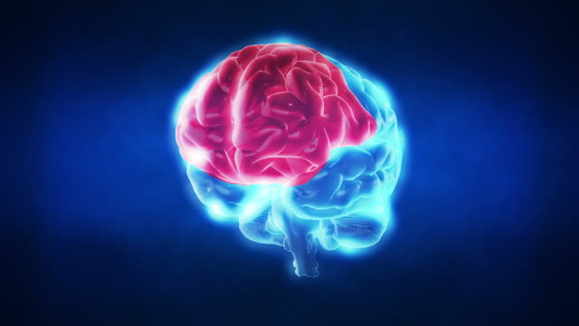 Cerebro humano partes/en bucle - vídeo
