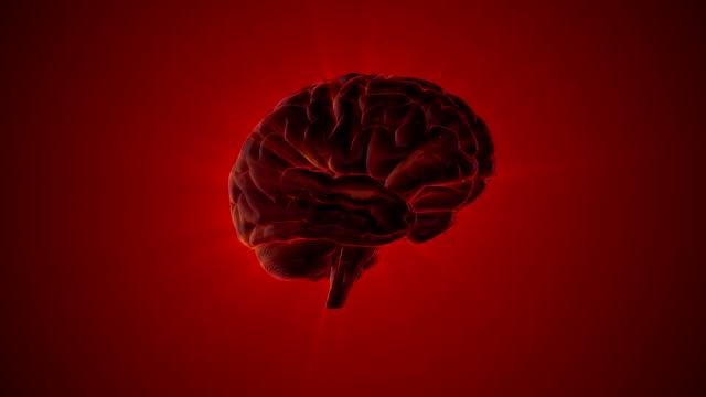 Human Brain Parts Stock Video - Download Video Clip Now - iStock