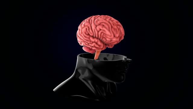 scansione cerebrale umana - arto umano video stock e b–roll