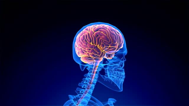 vídeos de stock e filmes b-roll de human brain - sistema nervoso humano