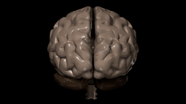 Human brain Human brain, spinning, isolated on black background, great to be used in medicine works and health. hypothalamus stock videos & royalty-free footage