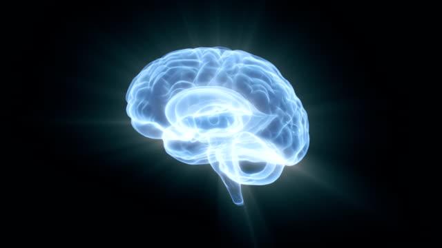 Human Brain Human Brain HD 1080 Seamless loop. cerebellum stock videos & royalty-free footage