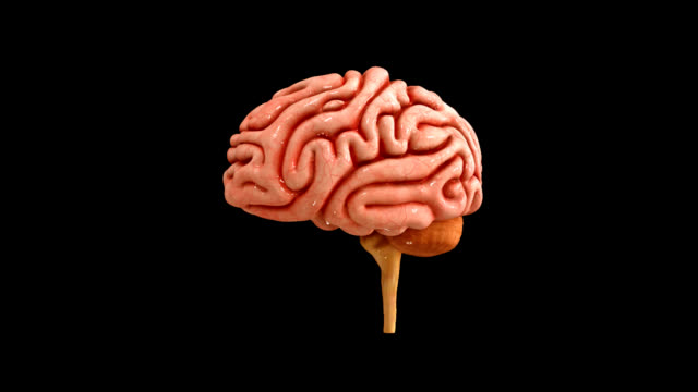 Royalty Free Human Brain Hd Video 4k Stock Footage B Roll Istock