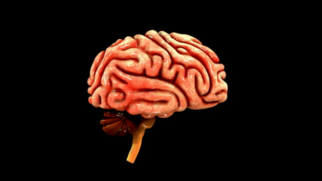 Human Brain Stock Video 607324628 Istock