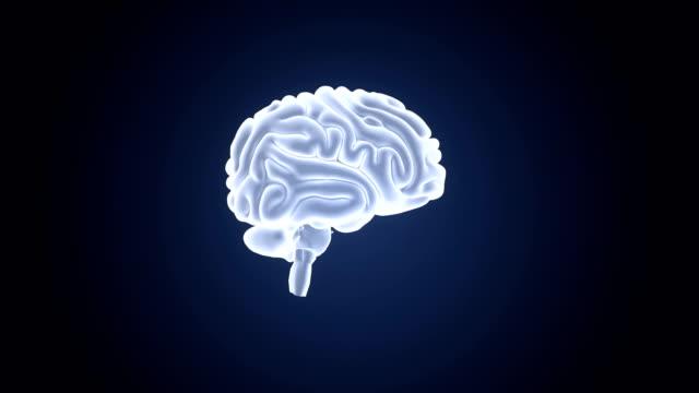 vídeos de stock e filmes b-roll de human brain - cerebelo
