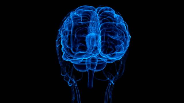 Human Brain with Circulatory System video