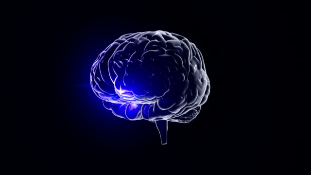 Human brain with neuronal impulses. Spinning. Loopable. Blue-Orange. video