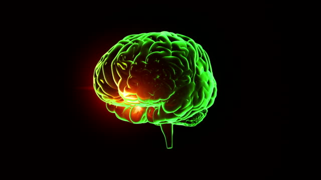 Human brain with neuronal impulses. Spinning. Loopable. Green-Blue. video