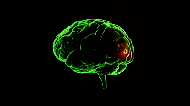 Human brain with regions lighting up. Synapsis. Loopable. Biology. Green. video