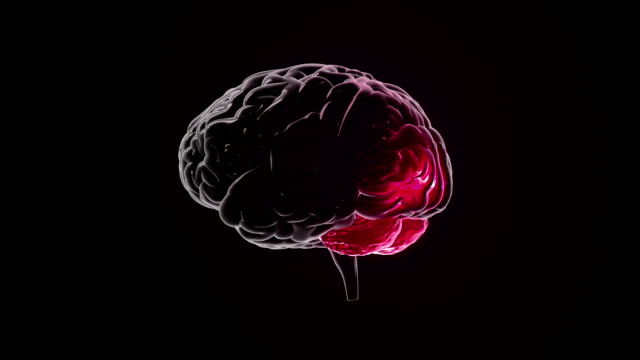 Human brain with regions lighting up. Synapsis. Loopable. Biology. Red. video