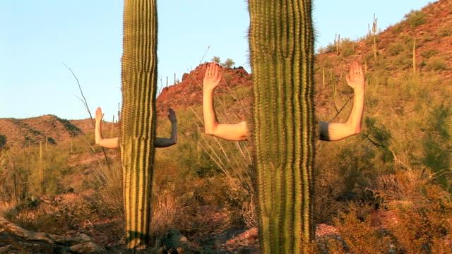 Human Cactus video