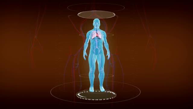 Human cardiovascular circulatory system. video