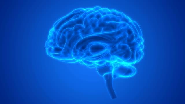 Human Central Nervous System Brain Anatomy 3D Illustration of Human Central Nervous System Brain Anatomy cerebellum stock videos & royalty-free footage