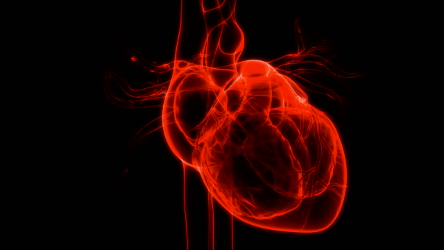 vídeos de stock e filmes b-roll de human circulatory system heart beat anatomy - coração humano